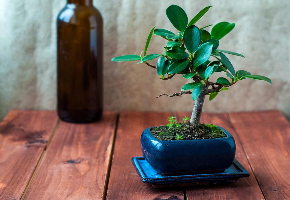 ミニ盆栽の写真
