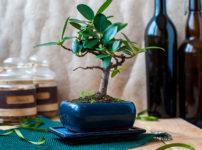 盆栽の肥料
