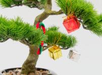 盆栽をプレゼント